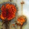 MICROORGANISMOS PARA EVITAR LA CORROSIÓN EN ESTRUCTURAS METÁLICAS - Industrias Metálicas la Azucarera
